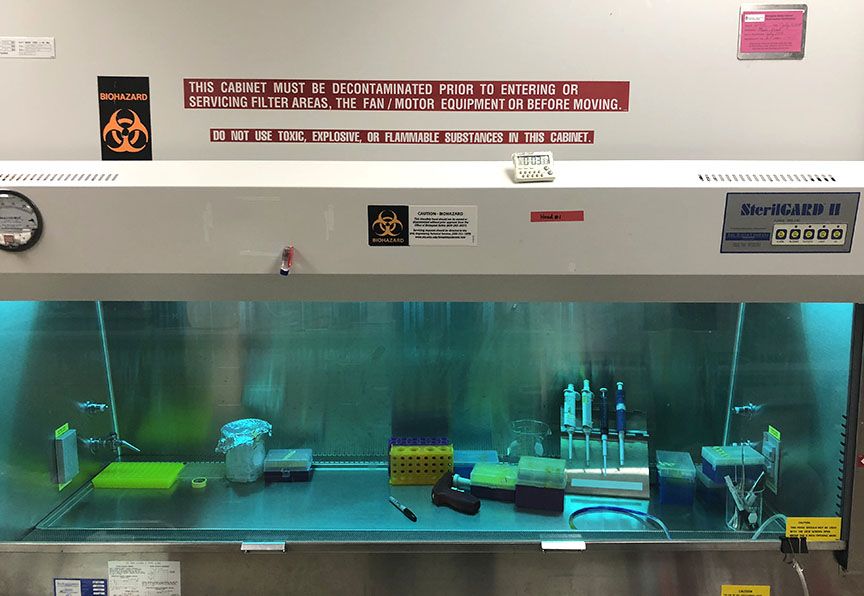 Cell culture hood - Tang lab
