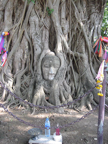 Carved tree in Thailand