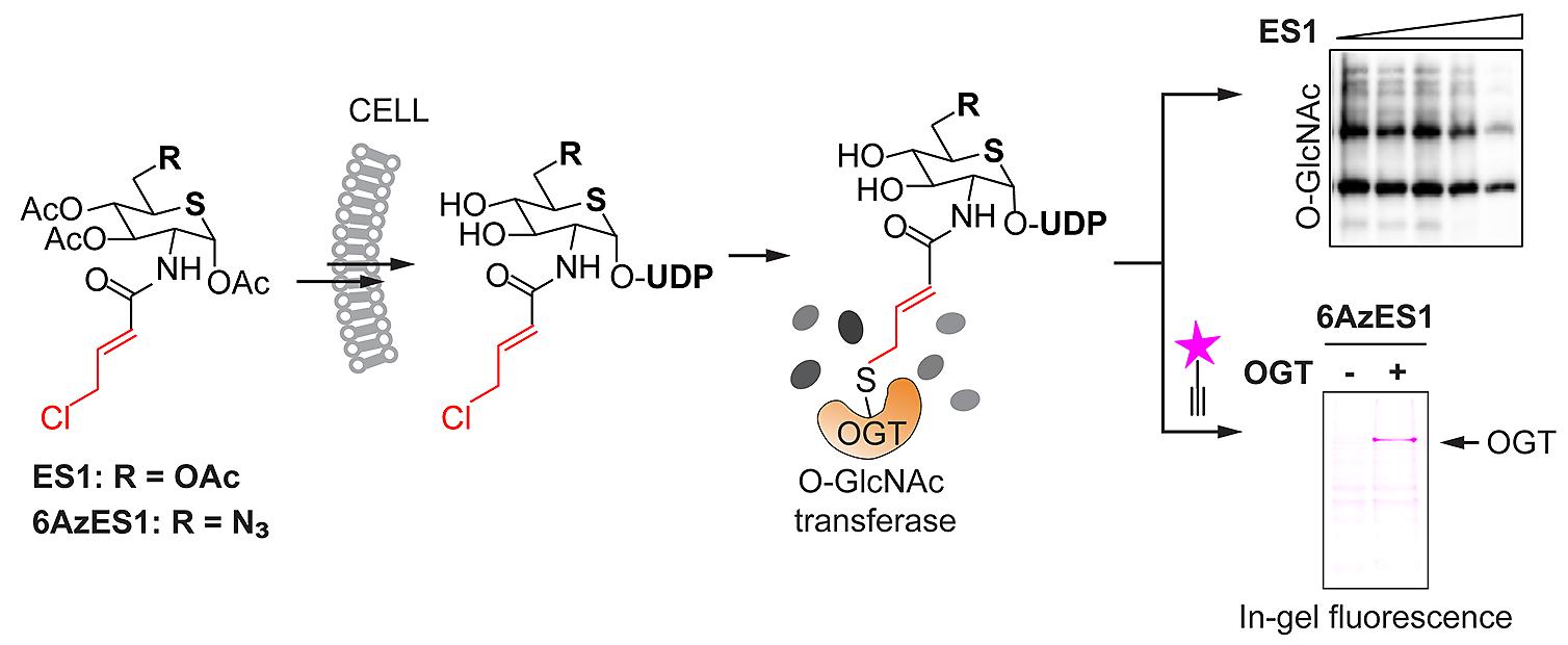 Chem Commun abstract